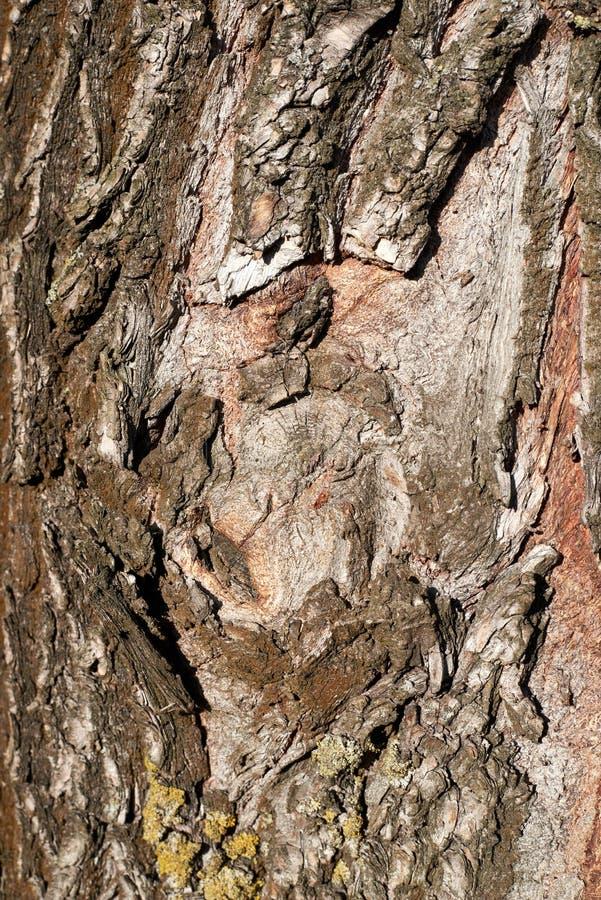 Textura de árbol, material, detalle, superficie imagen de archivo libre de regalías