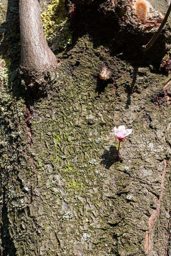 Textura de árbol, material, detalle, superficie fotografía de archivo libre de regalías