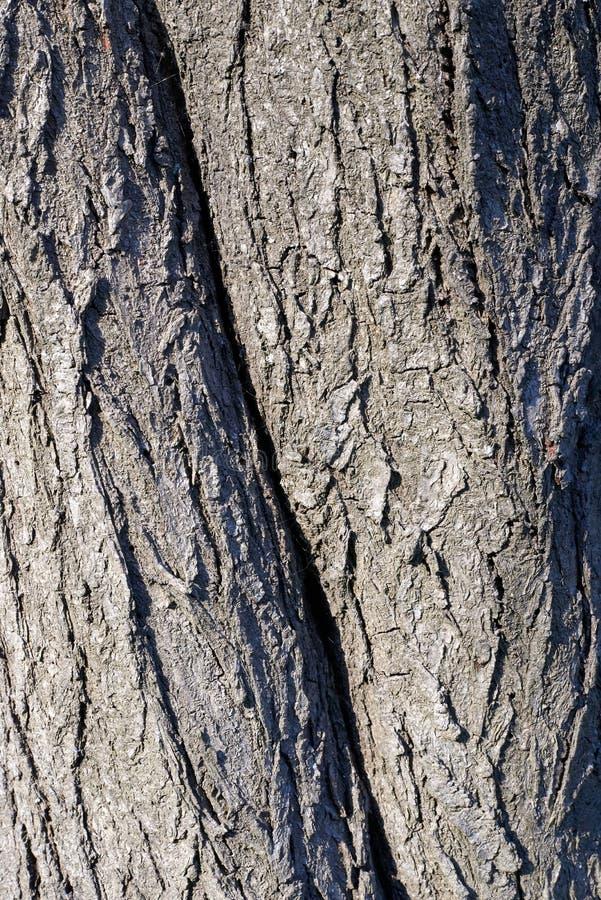 Textura de árbol, material, detalle, superficie fotos de archivo libres de regalías