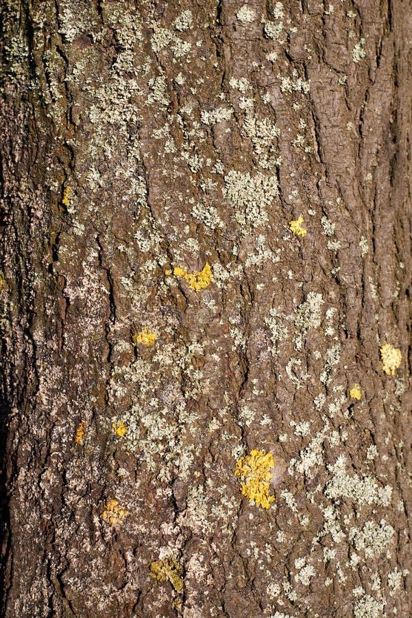 Textura de árbol, material, detalle, superficie foto de archivo