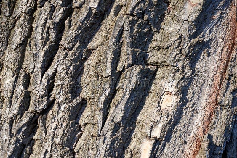 Textura de árbol, material, detalle, superficie fotografía de archivo