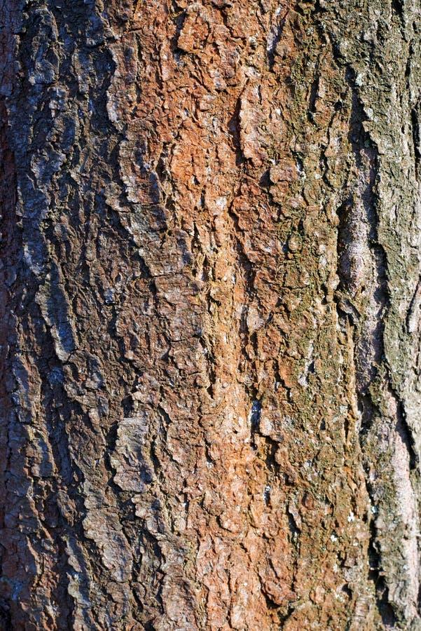 Textura de árbol, material, detalle, superficie imagenes de archivo