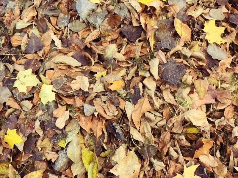 Textura de amarillo y del rojo, diversas hojas caidas naturales coloridas marrones del otoño Los antecedentes fotografía de archivo