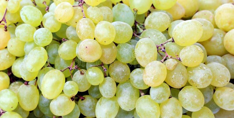 A textura de bagas das uvas imagens de stock