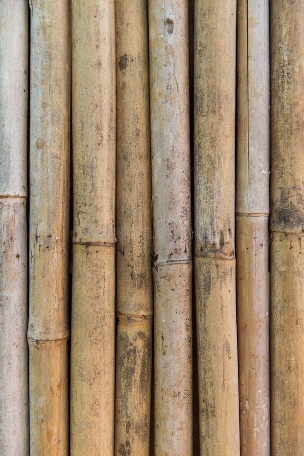 Textura de bambú de la pared del bastón fotografía de archivo libre de regalías
