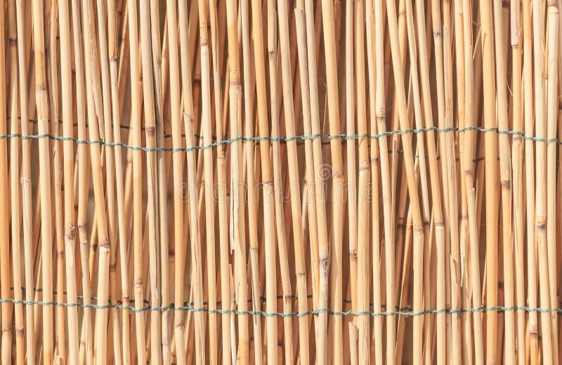 Textura de bambú de la pared del bastón imagenes de archivo