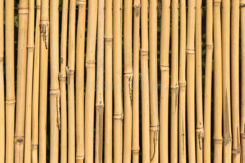 Textura de bambú del bastón foto de archivo libre de regalías