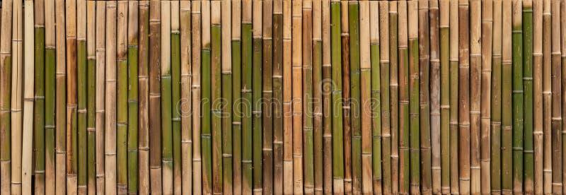 Textura de bambú, fondo de madera, contexto de bambú del tablón, papel pintado, panorama imágenes de archivo libres de regalías
