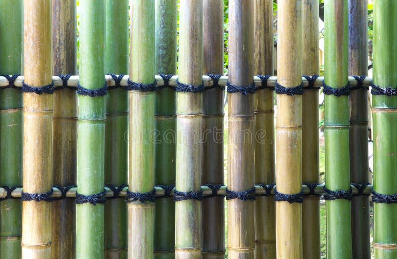 Textura de bambú natural fotografía de archivo