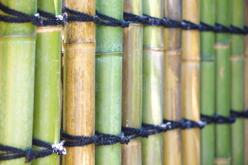 Textura de bambú natural imagen de archivo libre de regalías