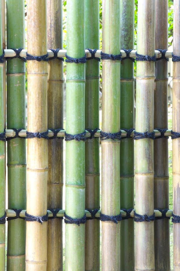 Textura de bambú natural imagen de archivo