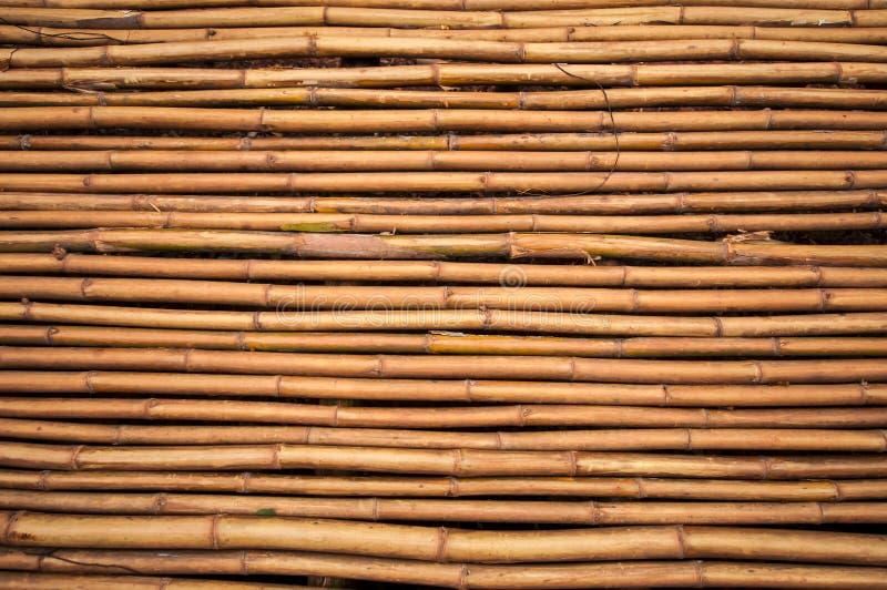 Textura de bambu fotografia de stock