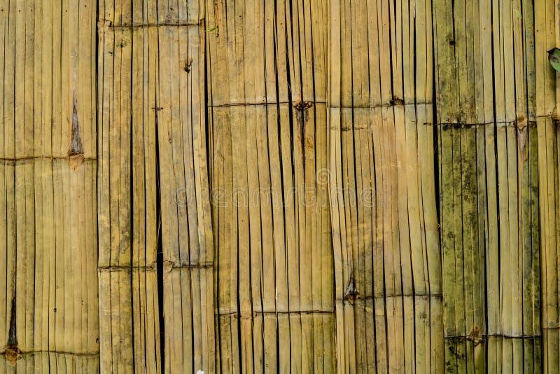 Textura de bambu da casca foto de stock