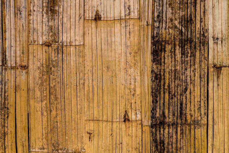 Textura de bambu da casca imagem de stock
