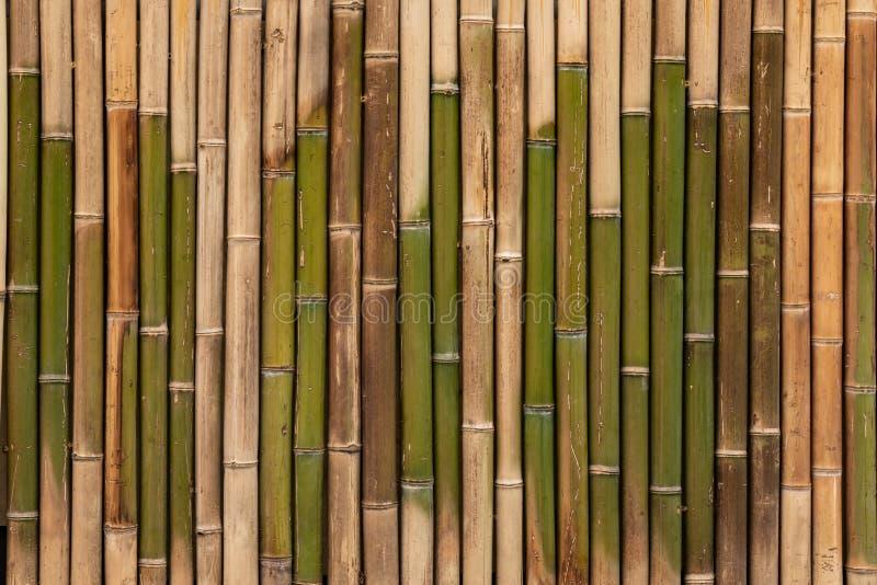 Textura de bambu, fundo de madeira, contexto de bambu da prancha, papel de parede imagens de stock royalty free