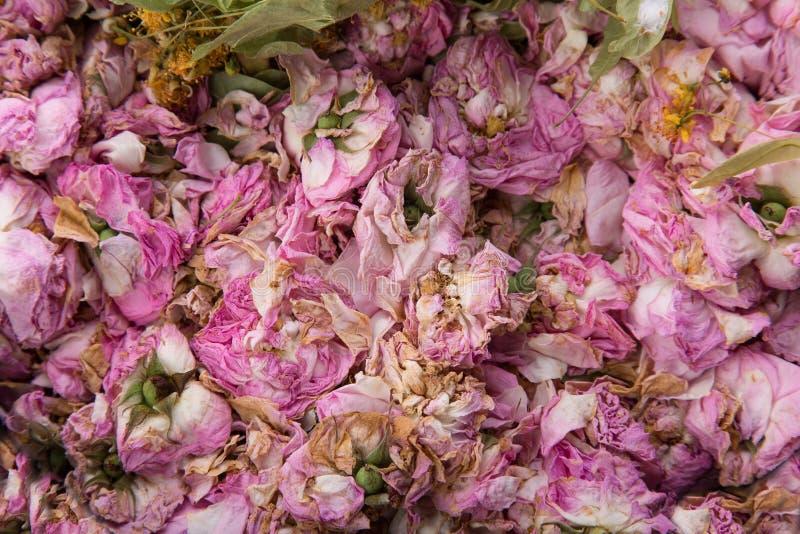 Textura de brotes color de rosa secados foto de archivo libre de regalías