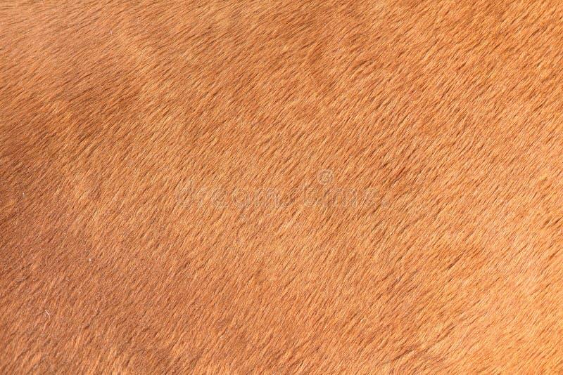 Textura de Brown do cabelo do cavalo imagem de stock royalty free