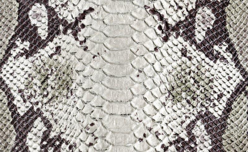 Textura de couro natural de Brown, verde e branco do réptil Teste padrão manchado pitão da pele da serpente imagem de stock