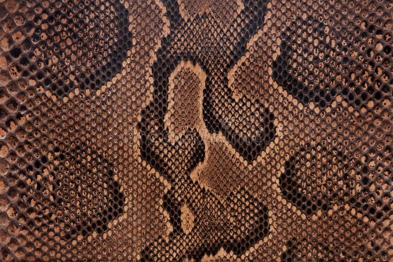 Textura de cuero de la serpiente fotos de archivo