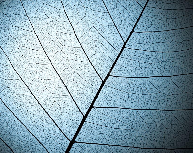 Textura de esqueleto da folha fotografia de stock