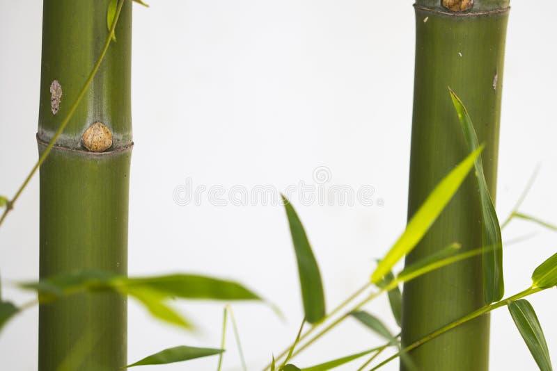 Textura de fundo natureza bambu com flora foliar herbal do estilo cartão postal de decoração da ásia fotografia de stock