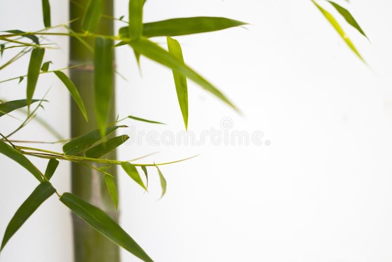 Textura de fundo natureza bambu com flora foliar herbal do estilo cartão postal de decoração da ásia imagens de stock