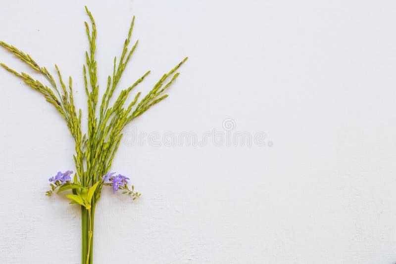 Textura de fundo a natureza espica arroz com flores roxas arranjo formato postcard plano imagens de stock