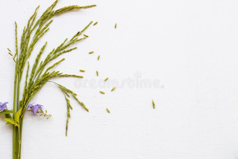Textura de fundo a natureza espica arroz com flores roxas arranjo formato postcard plano foto de stock royalty free