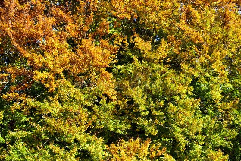 Textura de hojas en otoño fotos de archivo libres de regalías