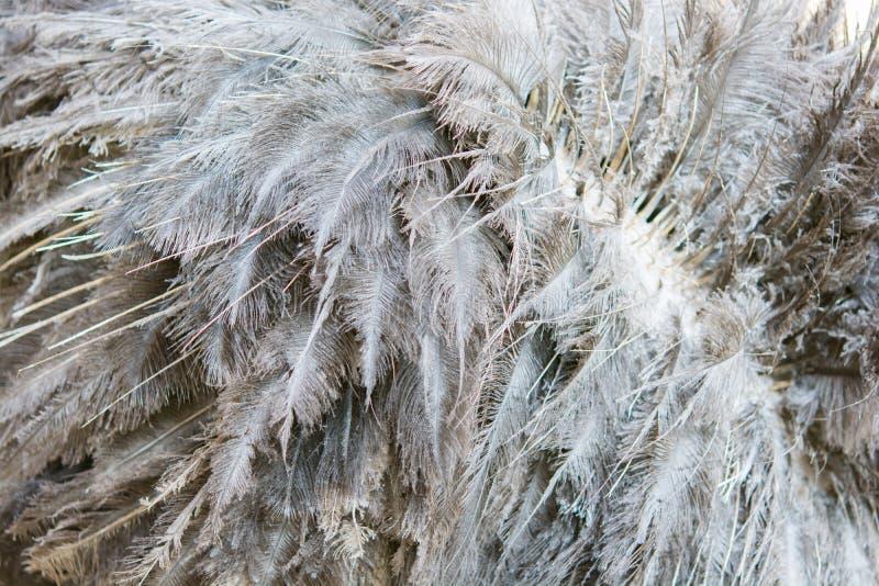 Textura de la avestruz del pelo imagen de archivo libre de regalías