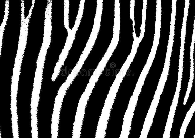 Textura de la cebra stock de ilustración