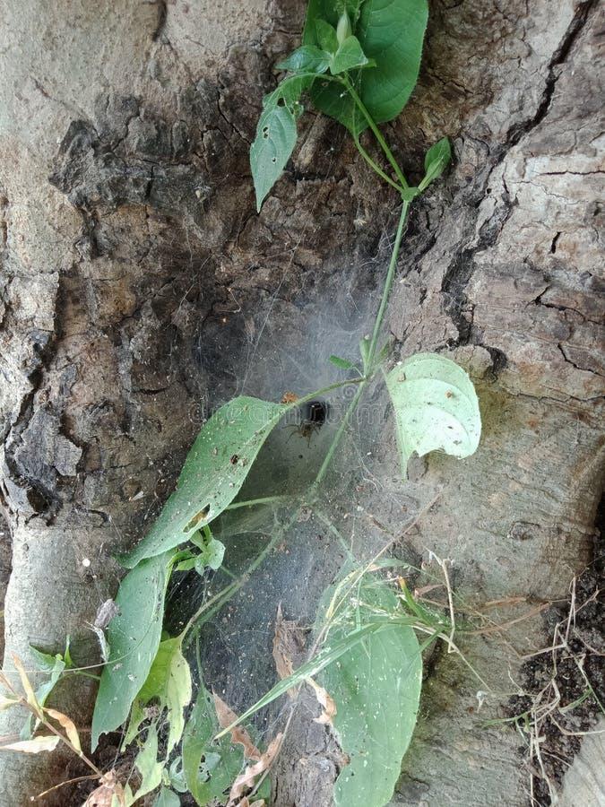 Textura de la corteza de árbol con la web de araña y las hojas, papel pintado del fondo de la creación de la naturaleza imágenes de archivo libres de regalías