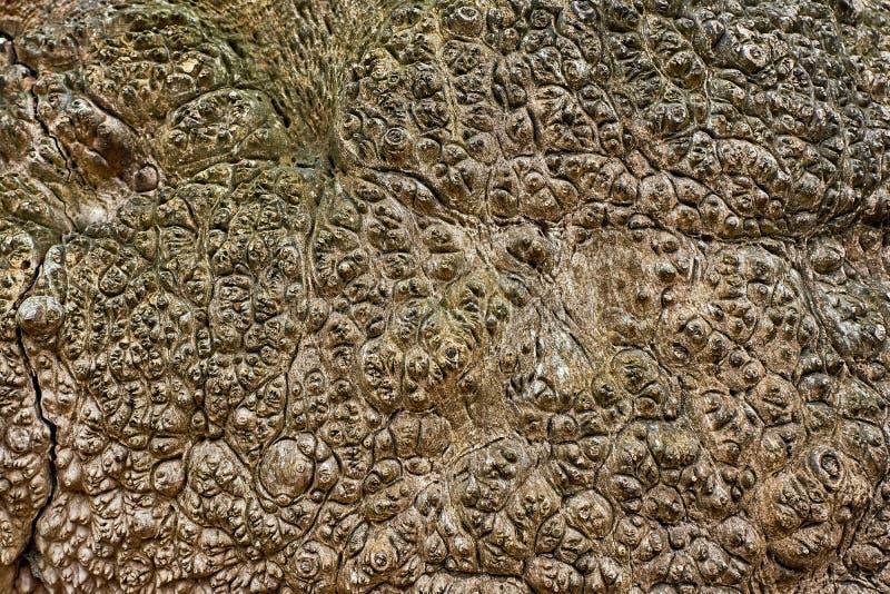 Textura de la corteza de árbol Fondo de madera abstracto fotos de archivo