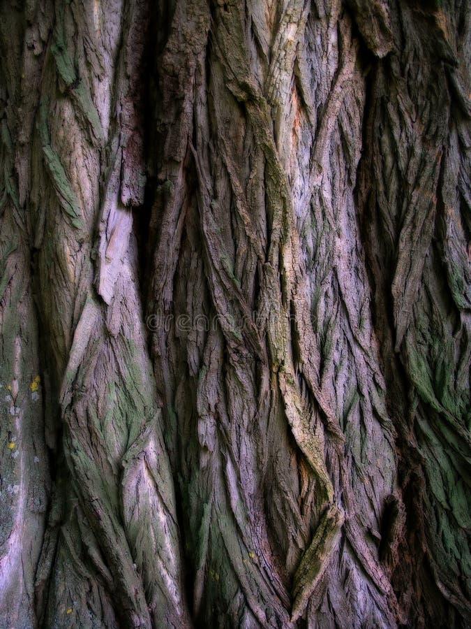 Textura de la corteza imagen de archivo libre de regalías