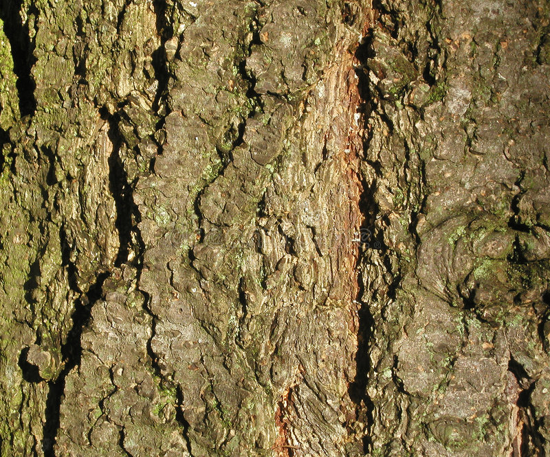 Textura de la corteza de árbol