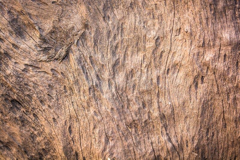 Download Textura De La Corteza De árbol Foto de archivo - Imagen de obsoleto, marrón: 42432826