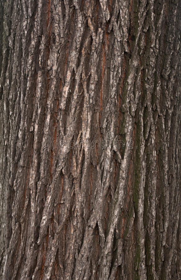 Textura de la corteza de árbol fotografía de archivo libre de regalías