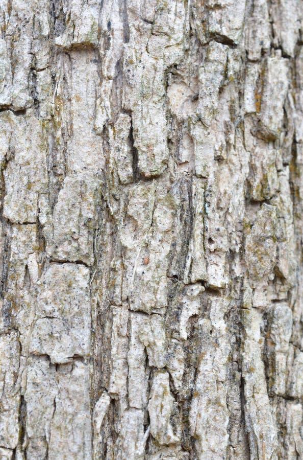 Textura de la corteza de árbol fotografía de archivo