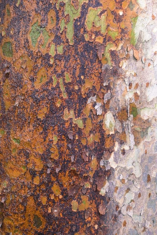 Textura de la corteza de árbol de Platan fotografía de archivo libre de regalías