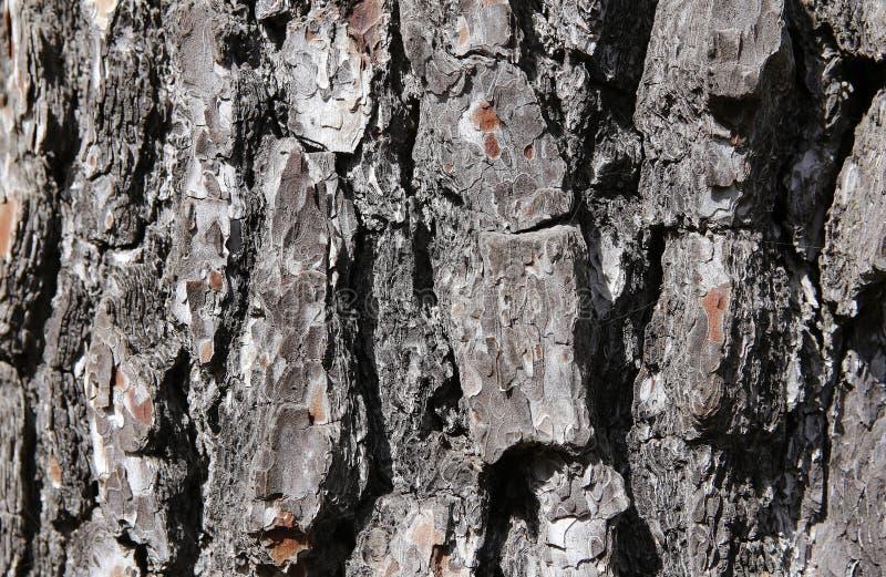 Textura de la corteza del tronco de árbol imagenes de archivo