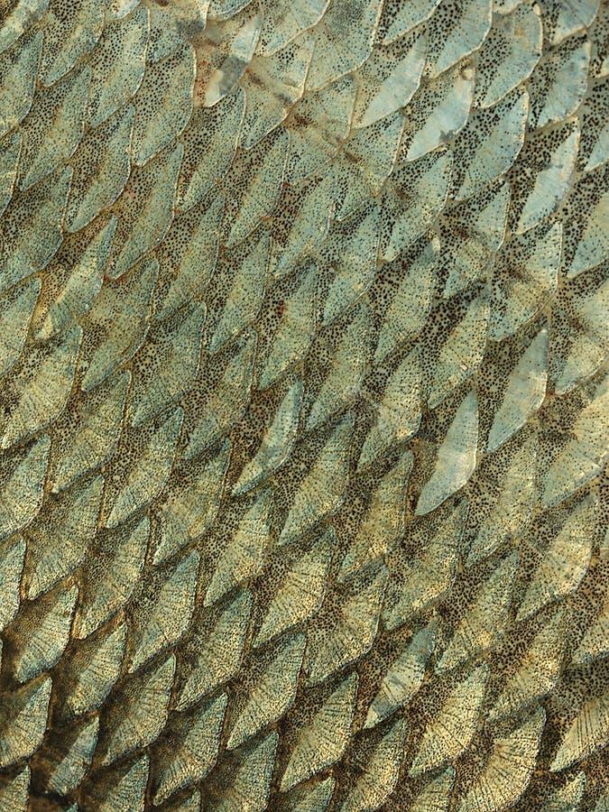 Textura De La Escala De Pescados Imagen de archivo - Imagen de color ...