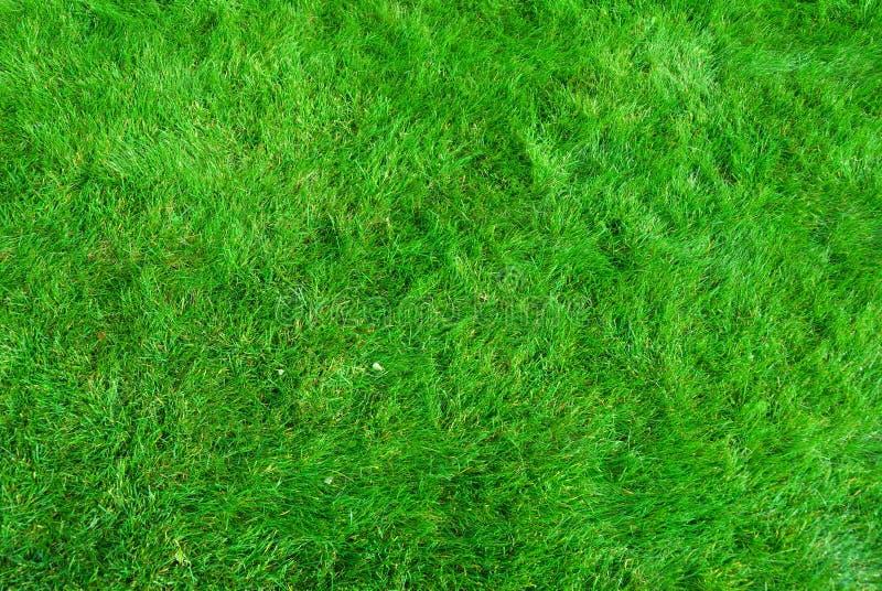 Textura de la hierba imágenes de archivo libres de regalías