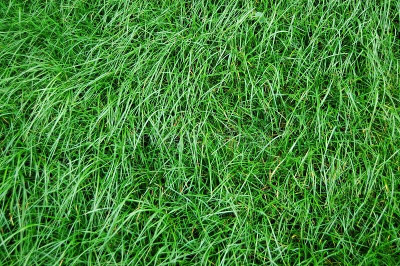 Download Textura de la hierba foto de archivo. Imagen de fondo - 7275300
