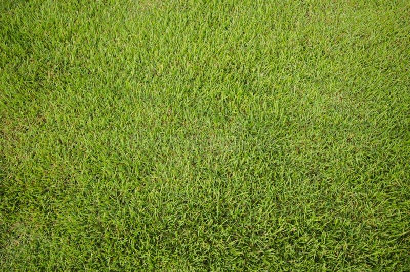 Textura de la hierba verde fotos de archivo
