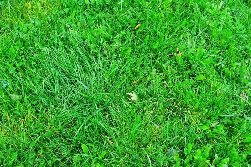 Textura de la hierba verde de un campo fotografía de archivo libre de regalías