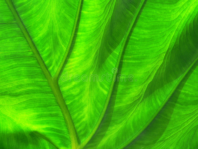 Textura de la hoja imagenes de archivo