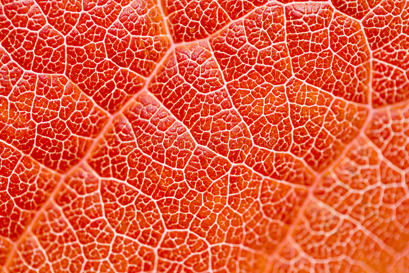 Textura de la hoja