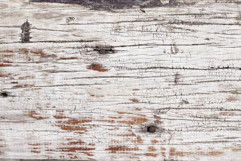 Textura de la madera de la corteza fotografía de archivo libre de regalías