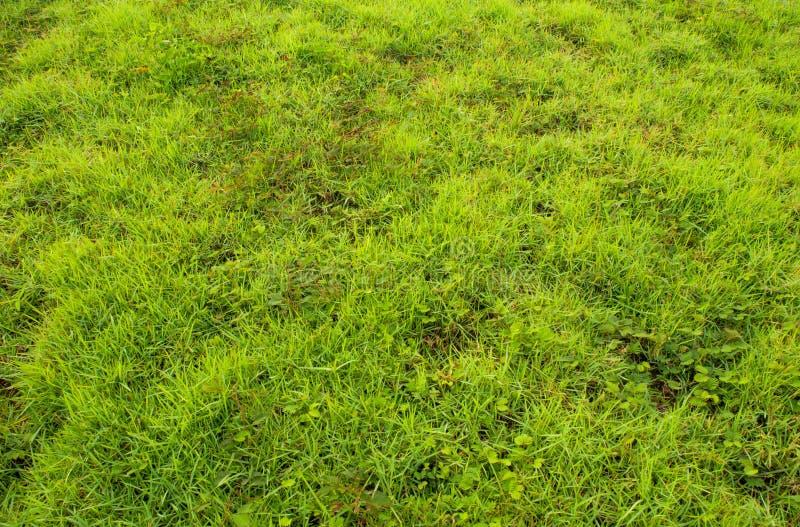 Textura de la mala hierba y de la hierba como fondo del verde de la frescura imágenes de archivo libres de regalías