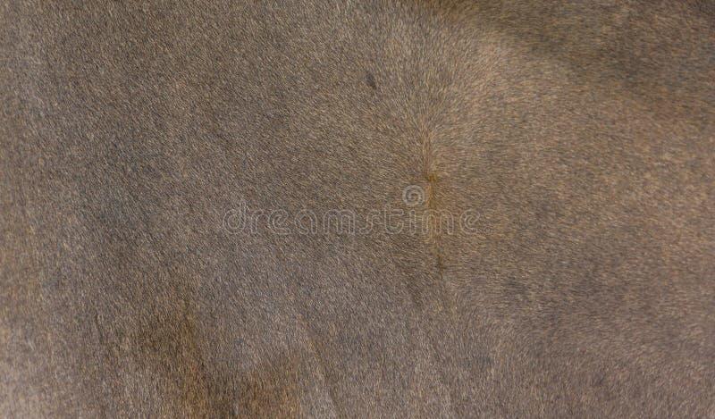 Textura de la piel animal imágenes de archivo libres de regalías